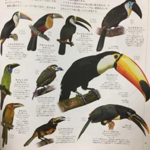 動物のページ
