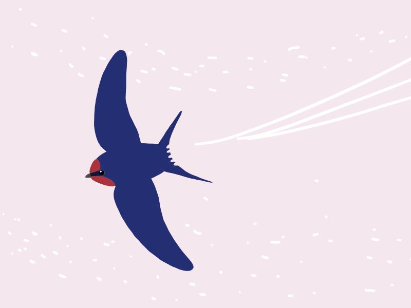 春の鳥たち【春は鳥たちが賑やかになる】