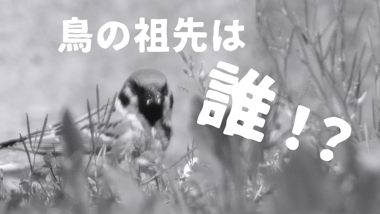 鳥の祖先は実は〇〇だった!?楽しく、簡単に解説!