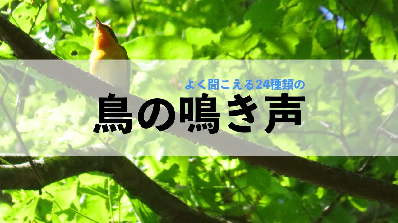 鳥の鳴き声!よく聞く鳥24種類の鳴き声を録音しました!