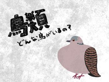 鳥類には、どんな種類の鳥がいるの?【最新40目を総まとめ】