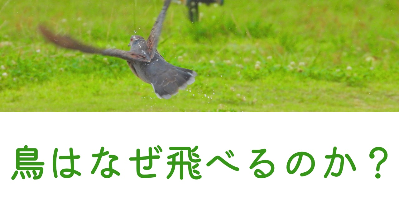 鳥が飛ぶ理由と飛べる体の秘密について