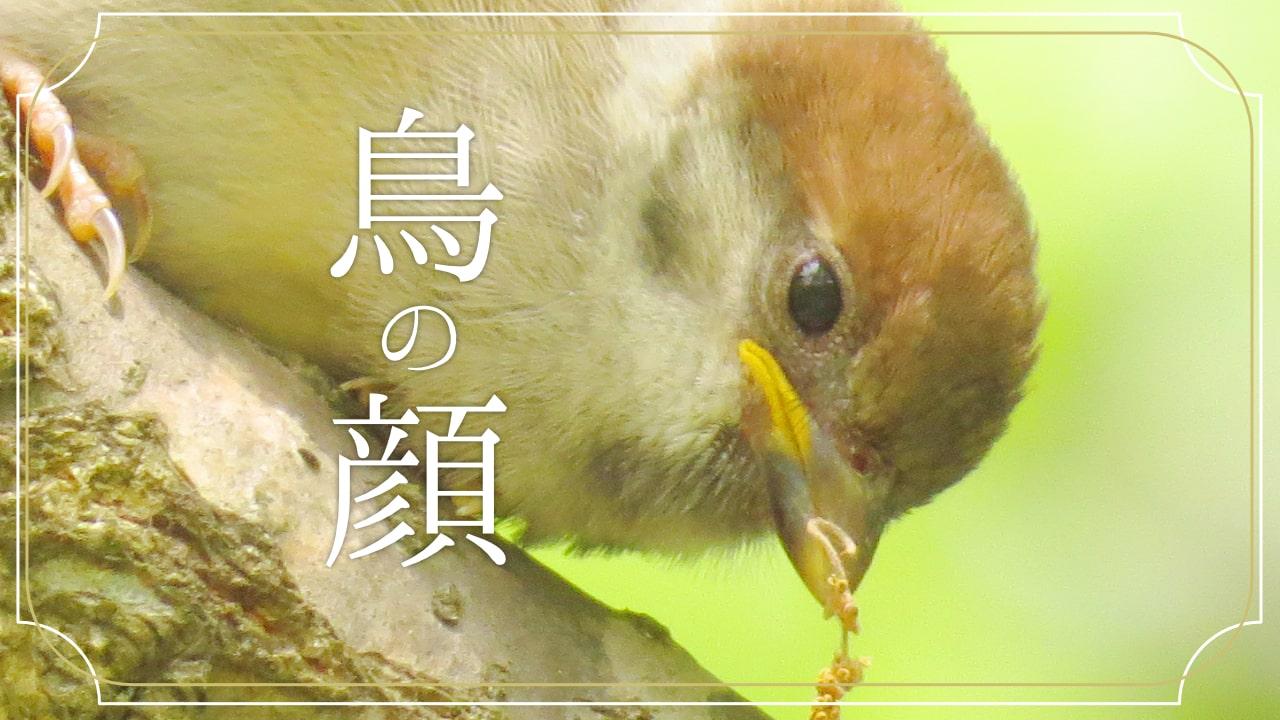鳥の顔で見比べる身近な10種類