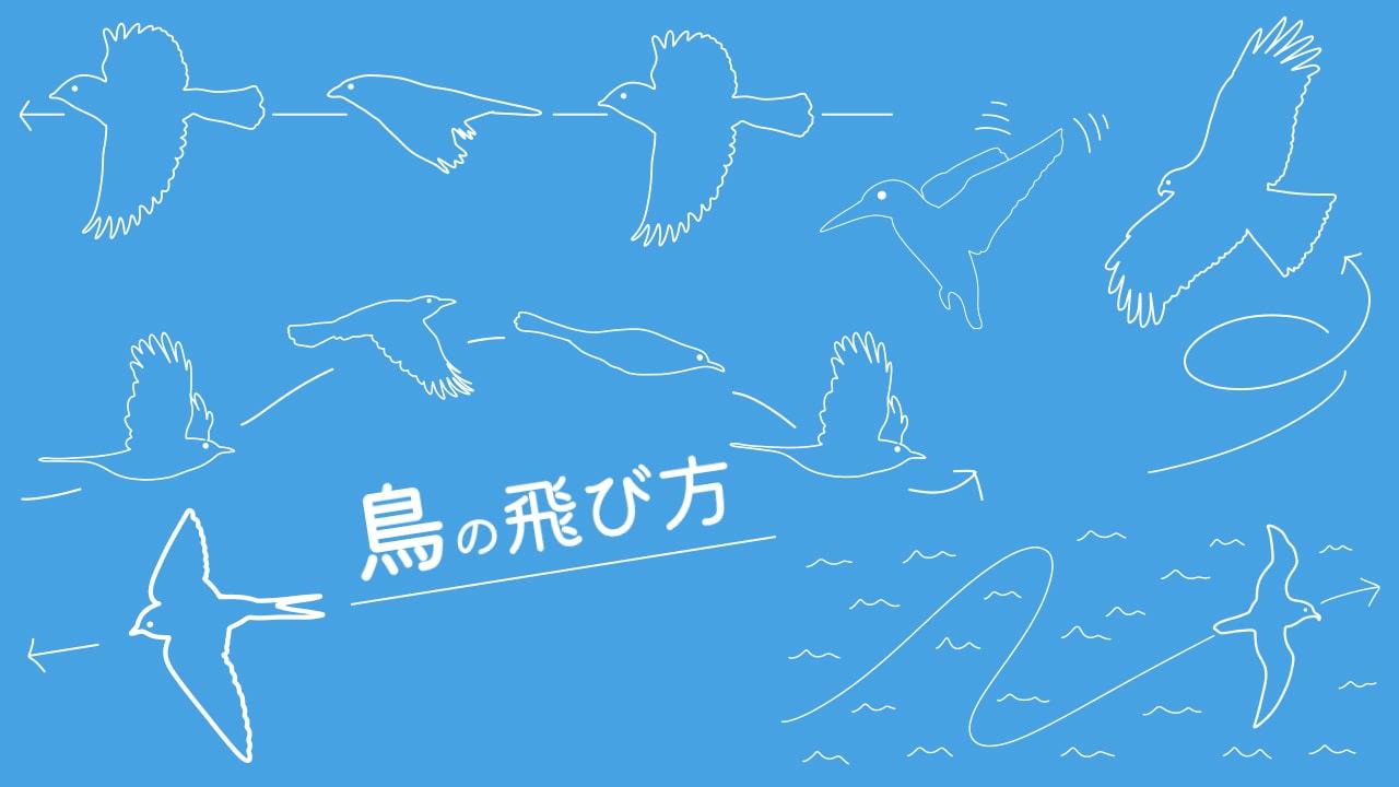鳥の飛び方6種類を解説!全部知っていますか?