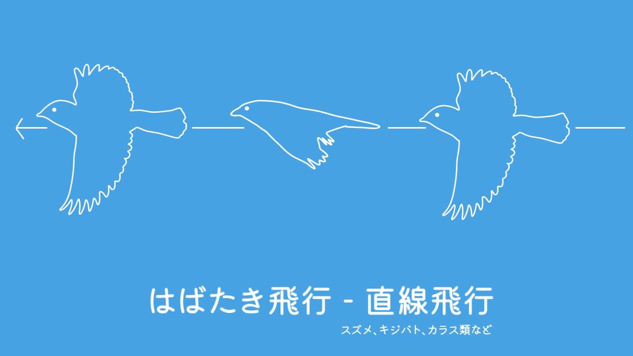 鳥の飛び方「直線飛行」のイラスト
