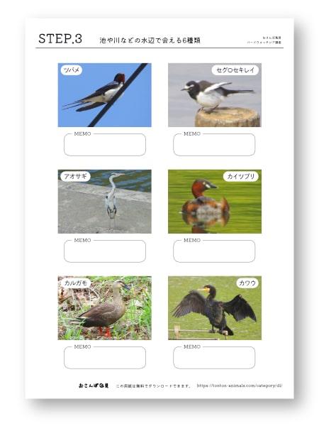 鳥探しのステップシートNo.3のバナー画像