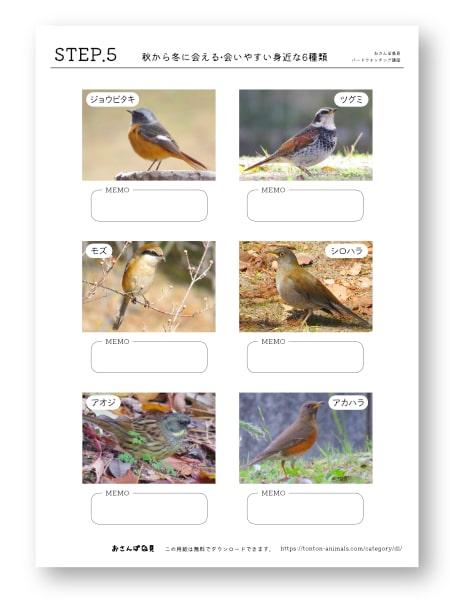 鳥探しのステップアップシートNo.5のバナー画像