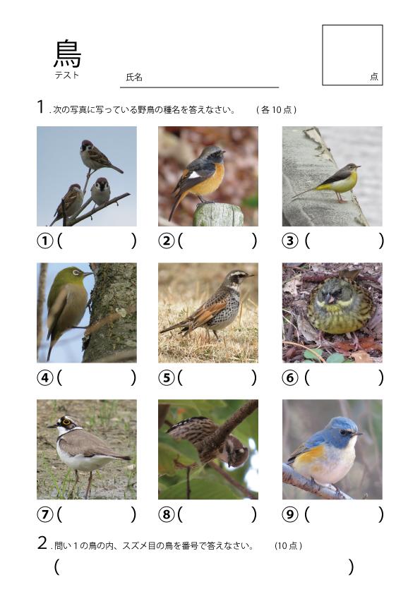 鳥クイズ問題用紙