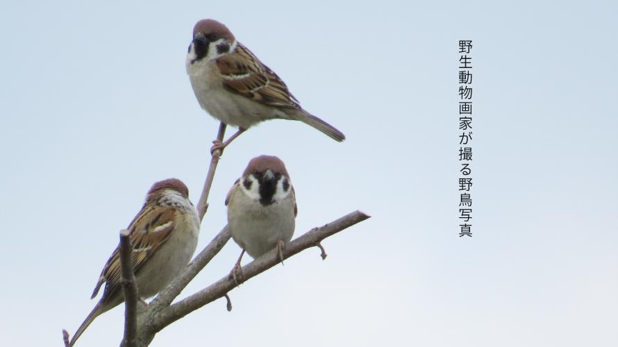 野生動物画家が撮る野鳥写真NO.1