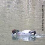 野生動物画家が撮る野鳥写真NO.2