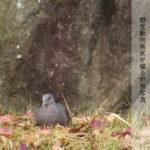 野生動物画家が撮る野鳥写真NO3