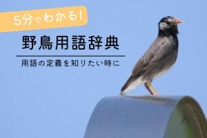 野鳥用語辞典バナー画像