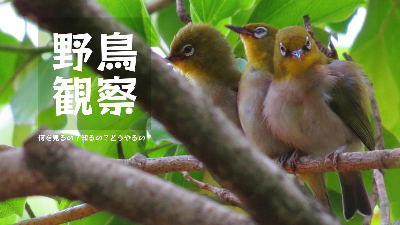 野鳥観察〜何を見るの?知るの?どうやるの?