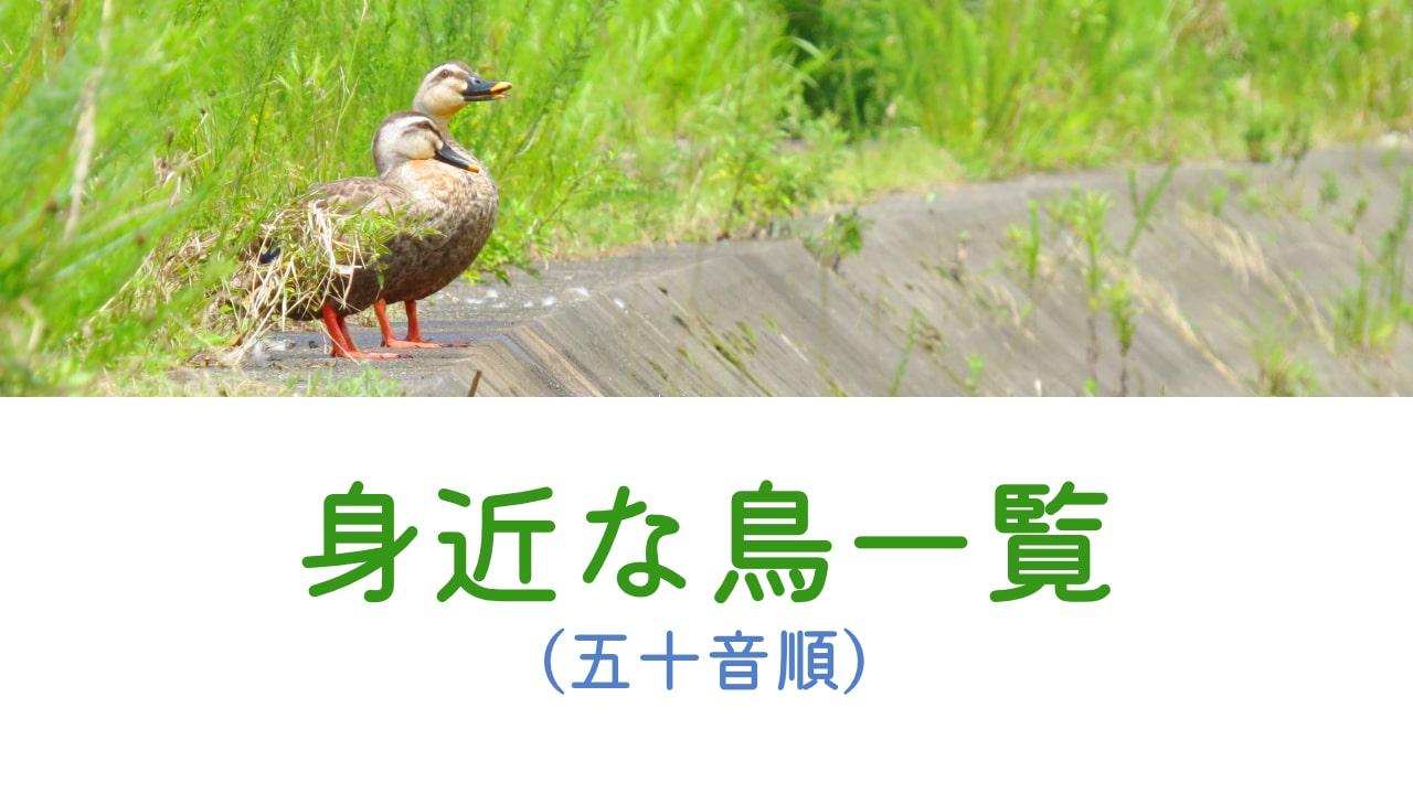 身近な鳥一覧(五十音順)
