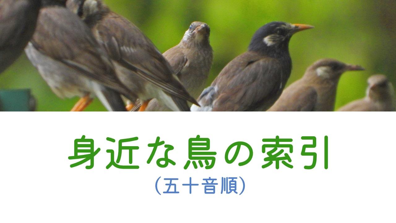 身近な鳥の索引