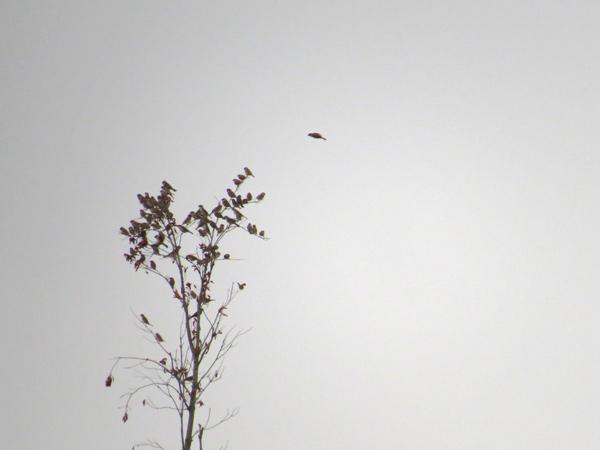 スズメの写真「スズメの木」