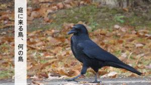 庭に来る鳥の名前を調べる
