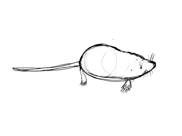 カワネズミの描き方ーとりあえず描く
