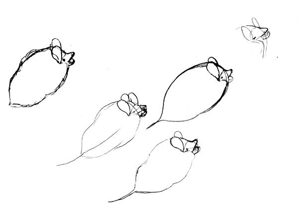 コテングコウモリの描き方ーなんか違うと、微調整してみる