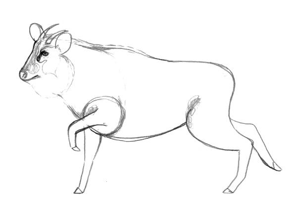 ニホンカモシカを描こうー線を整える