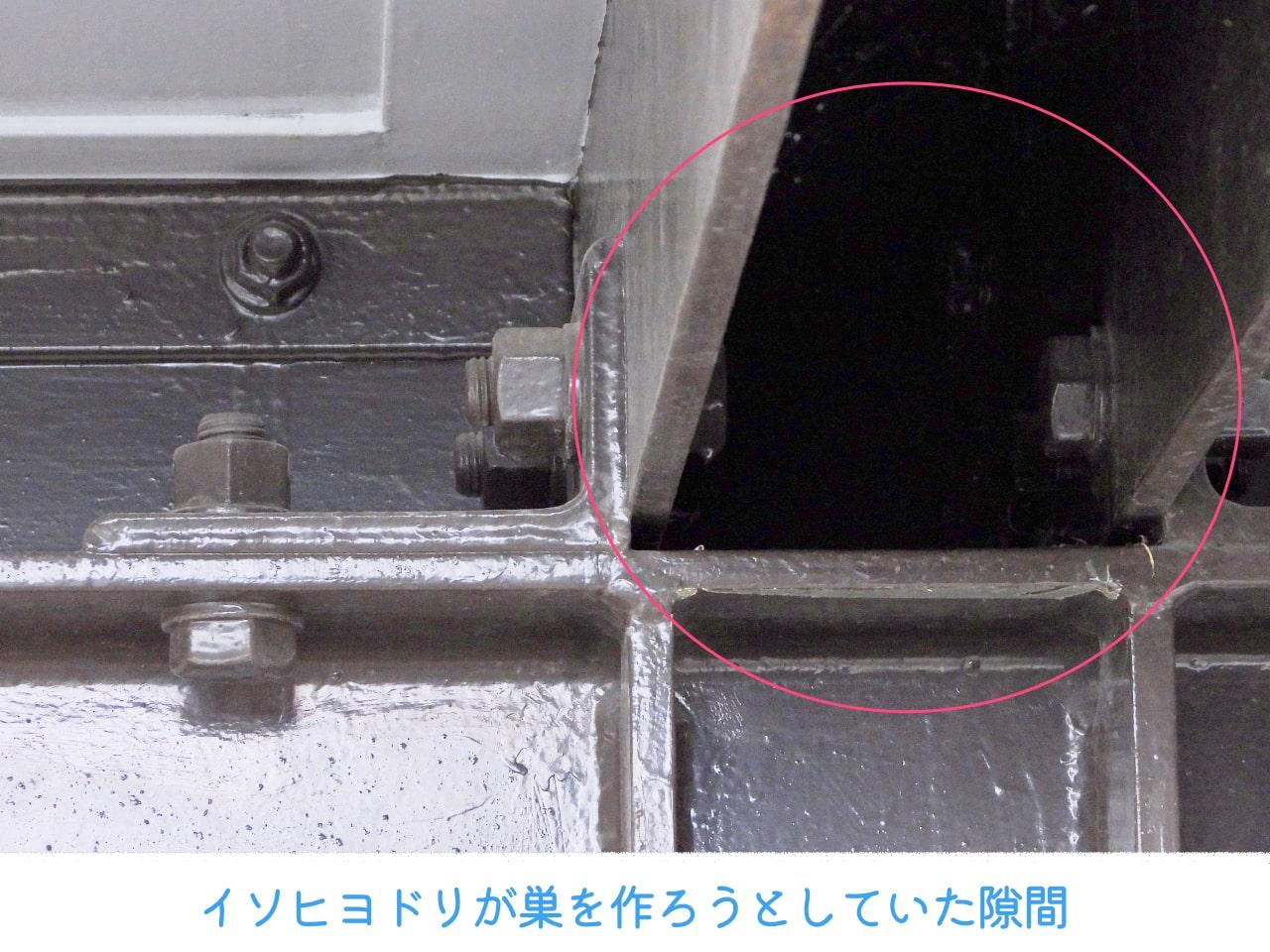 いそひよどりが巣を作ろうとしていた建造物の隙間の画像
