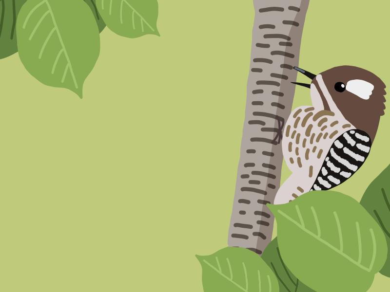 コゲラの鳴き声