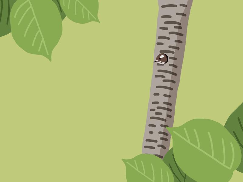 コゲラの巣作り:巣の写真?時期?巣立ちひなの様子