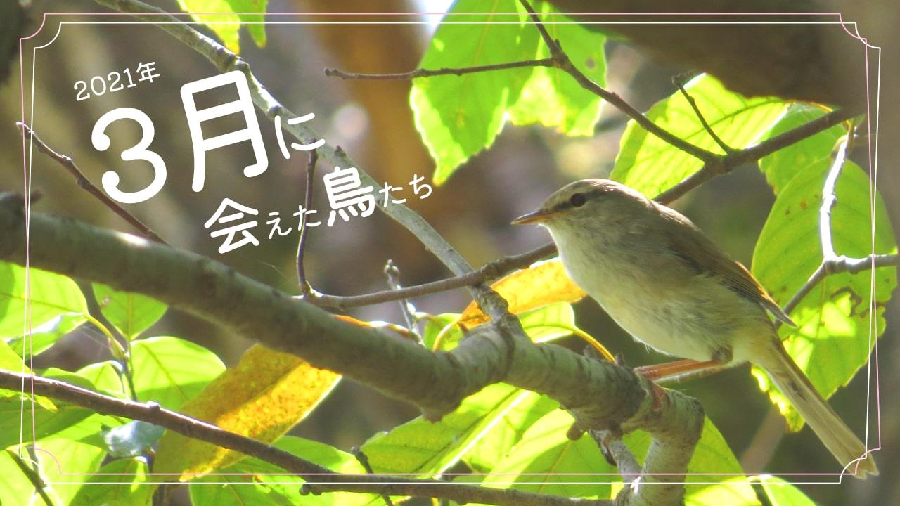 2021年3月に会えた鳥たち