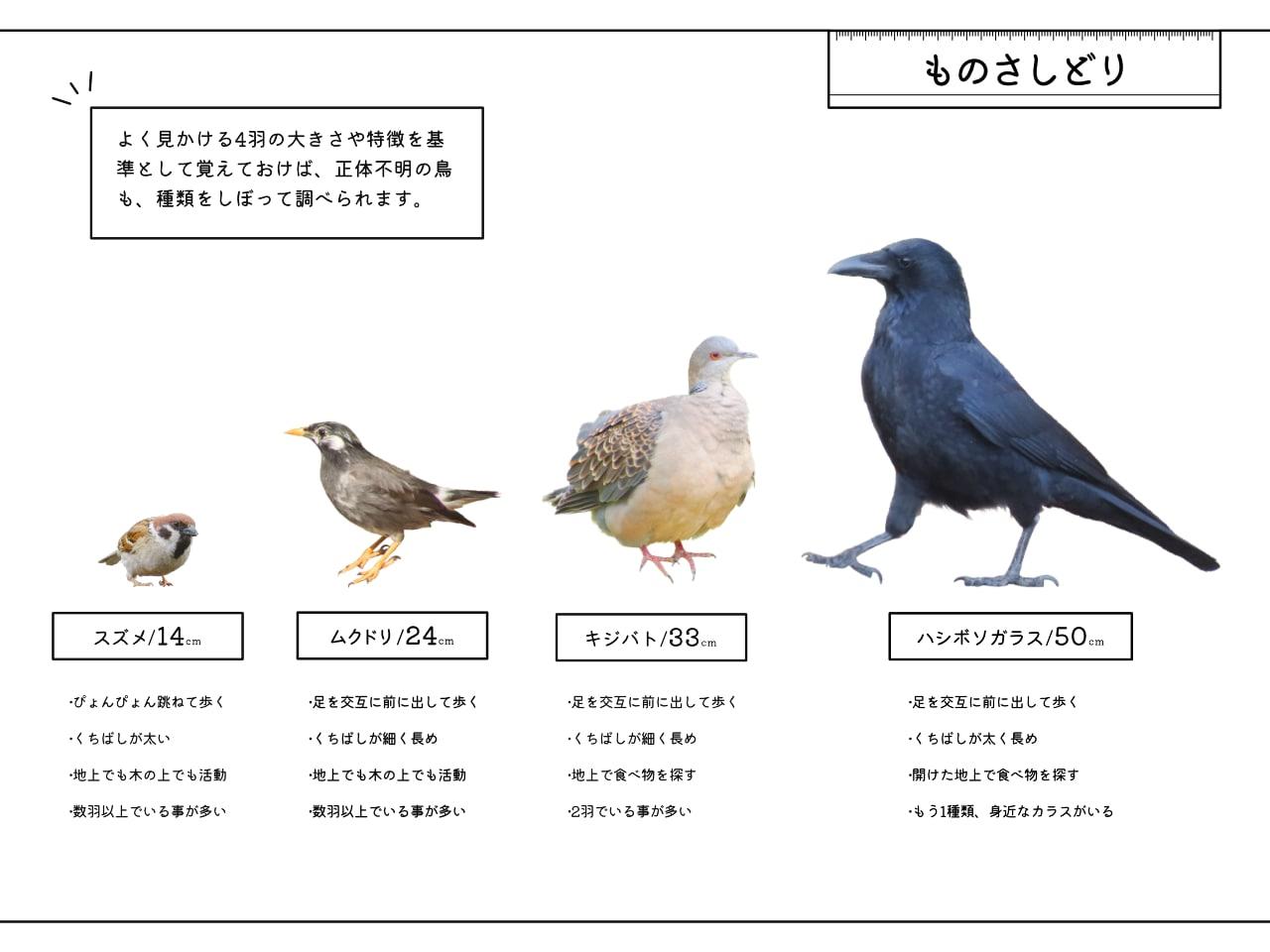 ものさしどり4羽をまとめた画像