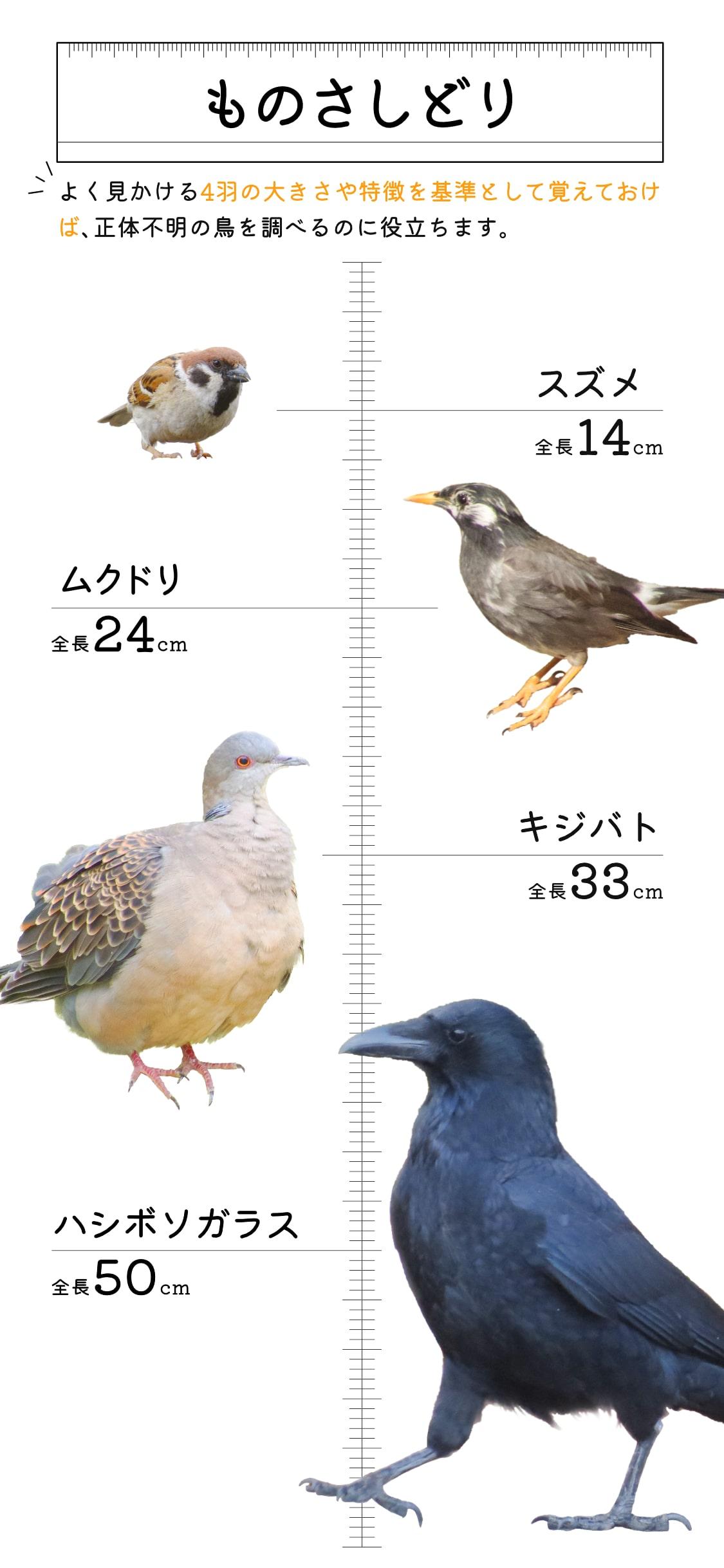 ものさしどり4羽をまとめた縦長画像