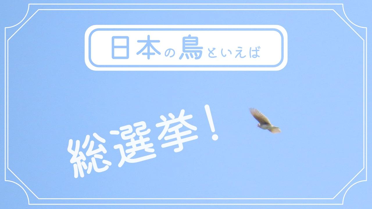 日本の鳥といえば?7羽の鳥で総選挙!あなたはどの鳥を選ぶ!?!