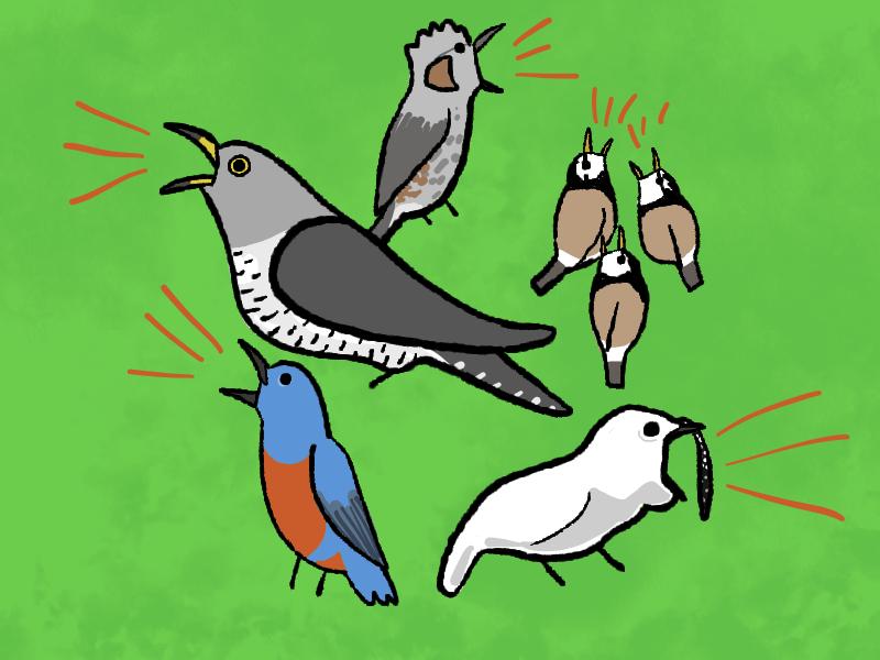 うるさい鳥の正体と種類