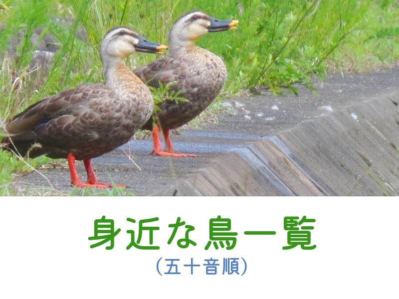 おさんぽ鳥見掲載鳥一覧へ