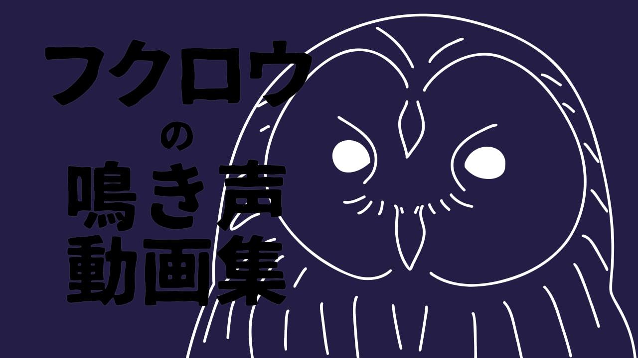 フクロウ類の鳴き声動画一覧〜鳴き声を聞き比べてみよう!