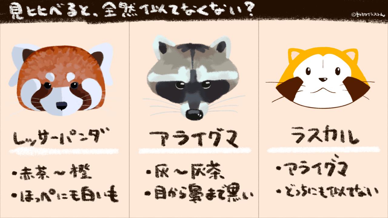 レッサーパンダとアライグマとラスカルを見比べたイラスト