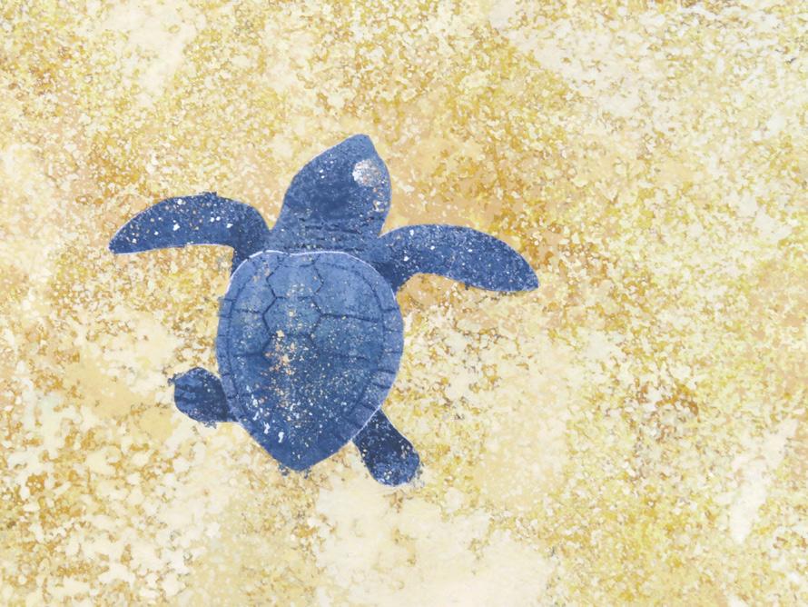 アカウミガメの赤ちゃん拡大画像