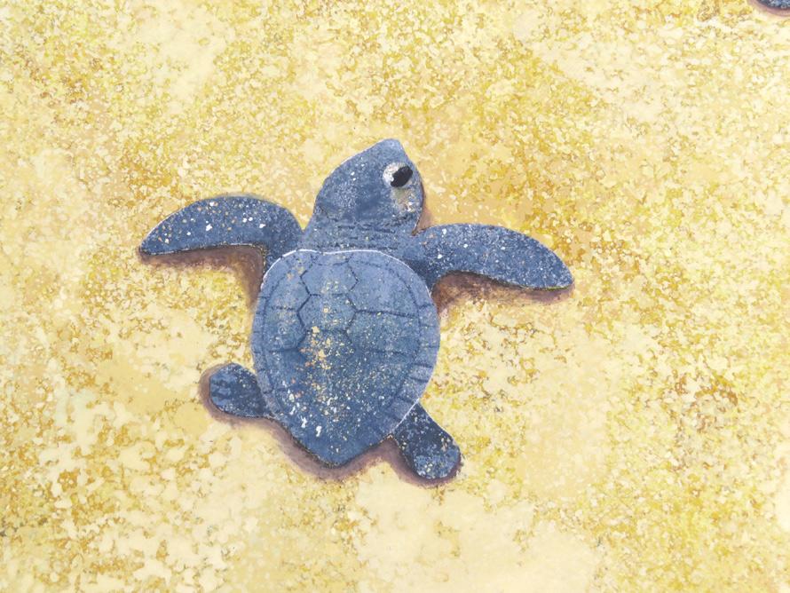 アカウミガメの赤ちゃん完成拡大画像