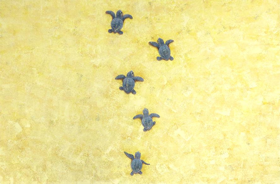 スポンジで描かれる動物の絵~アカウミガメ完成~