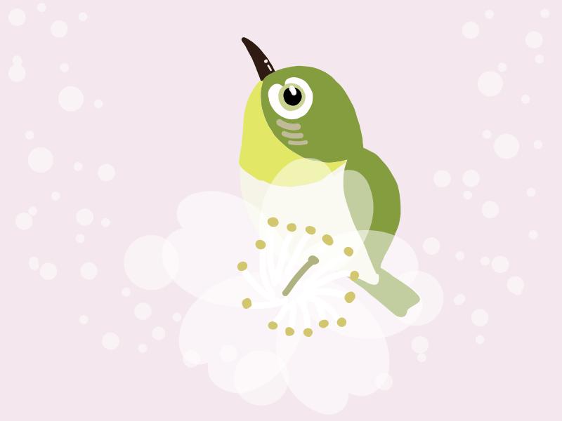 春の鳥のイラスト:メジロ
