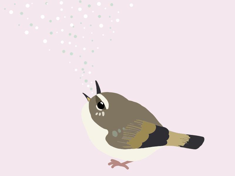 春の鳥の鳴き声【聞こえてくる鳥の鳴き声の正体は?】