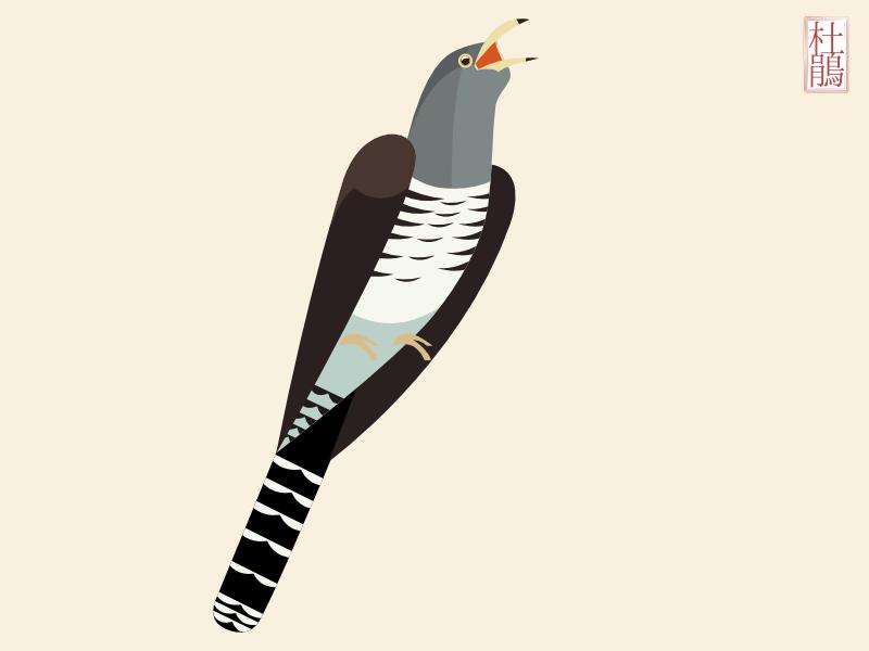 夏の鳥:ホトトギスのイラスト