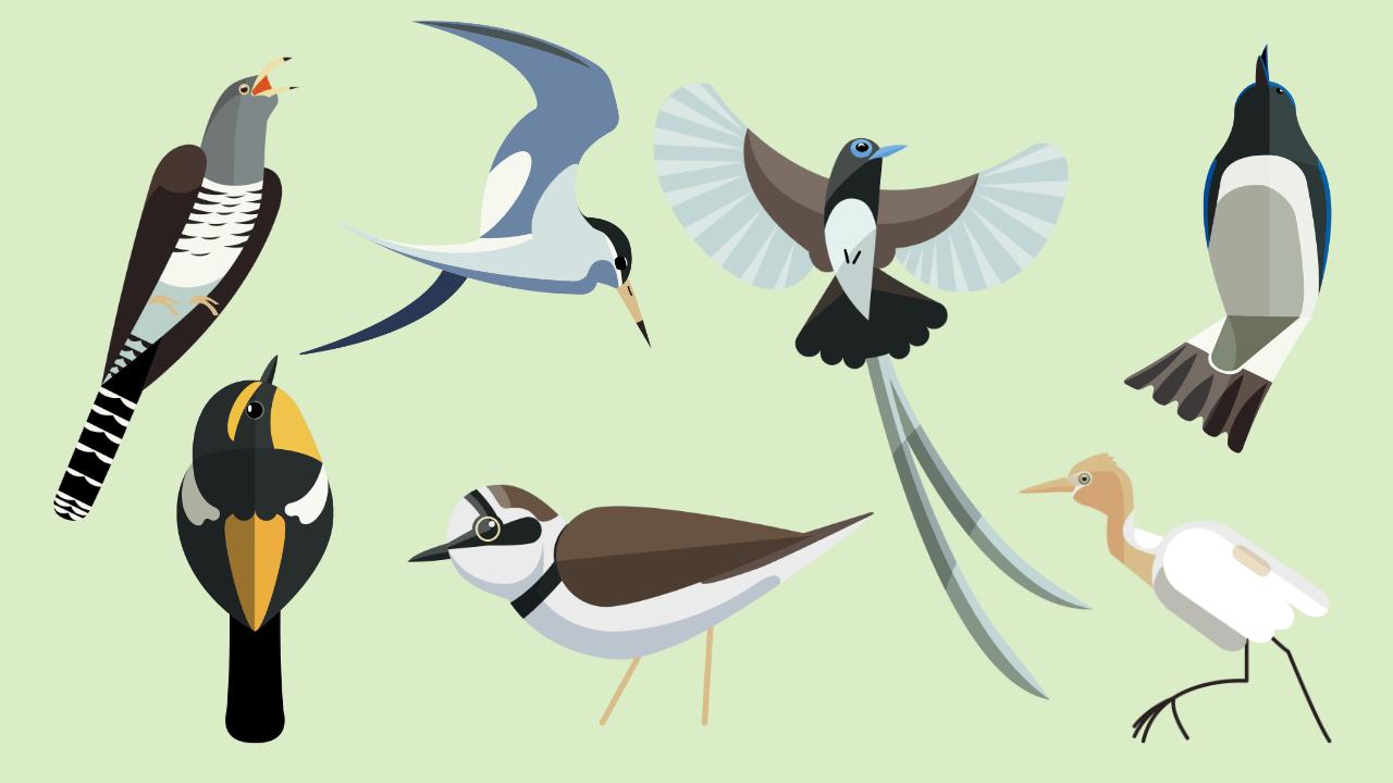 夏の鳥のイラスト