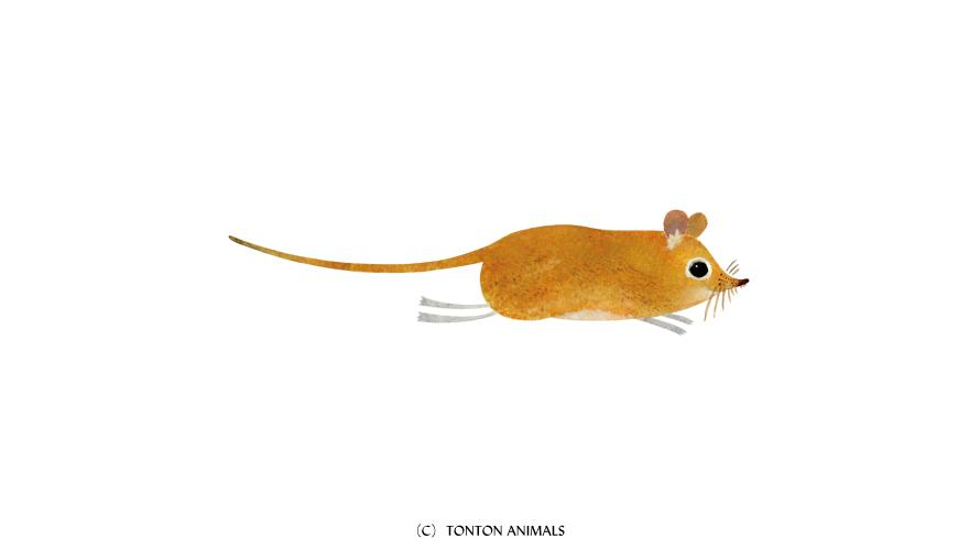 魅力的な動物の絵を描く前に意識したい、たった一つの事。