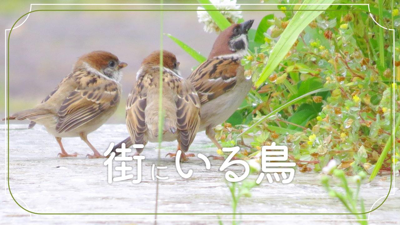 街にいる鳥を15種類を紹介!よく見る鳥から、たまにいる鳥まで!