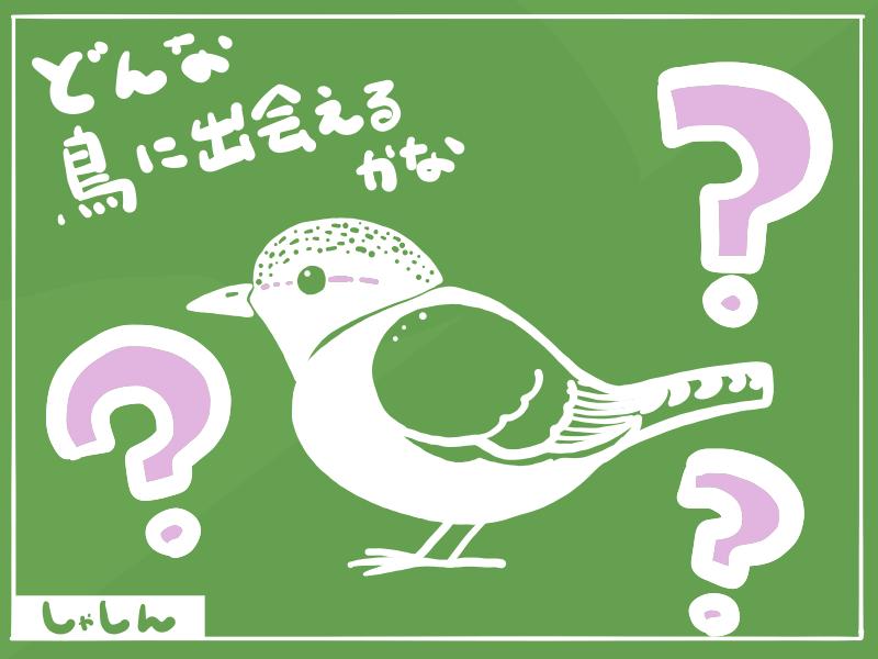 どんな鳥に出会えるかな?