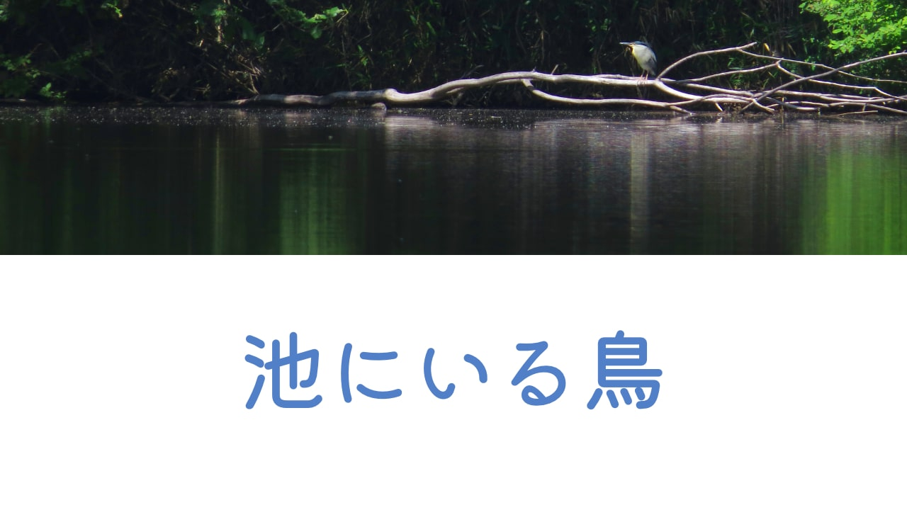 池にいる鳥