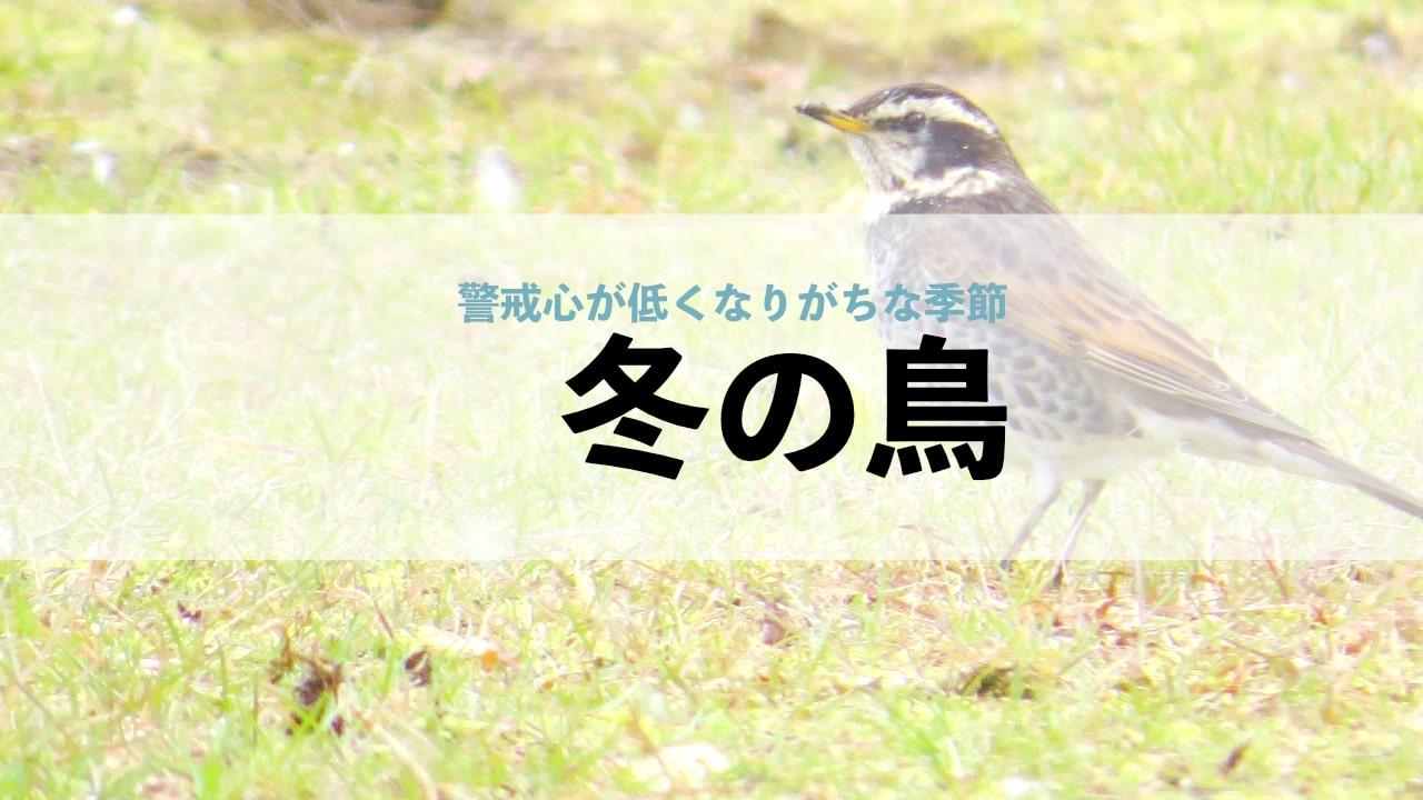 冬の鳥!散歩で会える20種類!