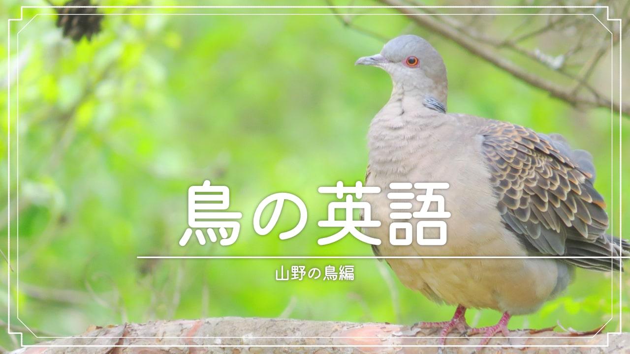 まとめて見れる!山野の鳥の英語一覧表!!